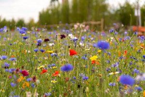 5 Alasan Pencinta Lingkungan Menentang RUU Pertanian Inggris