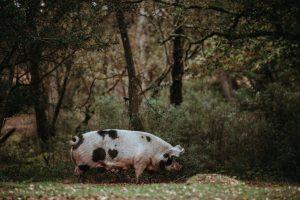 Bagaimana Pertanian dan Kehutanan Dapat Hidup Berdampingan