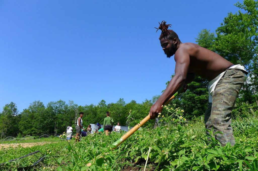 Bagaimana Soul Fire Farm Membawa Keadilan Ke Pertanian AS