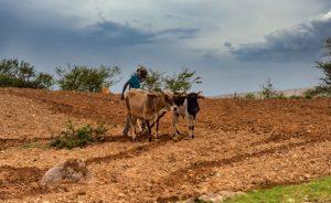 Konflik Ethiopia Telah Mempengaruhi Pertanian di Tigray